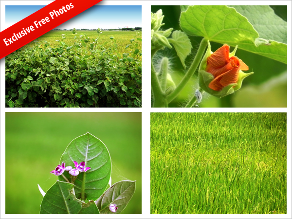 Free nature photos download