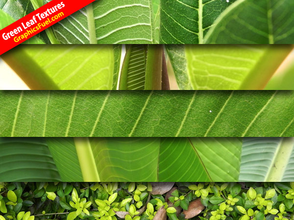 Hi-res leaf textures pack