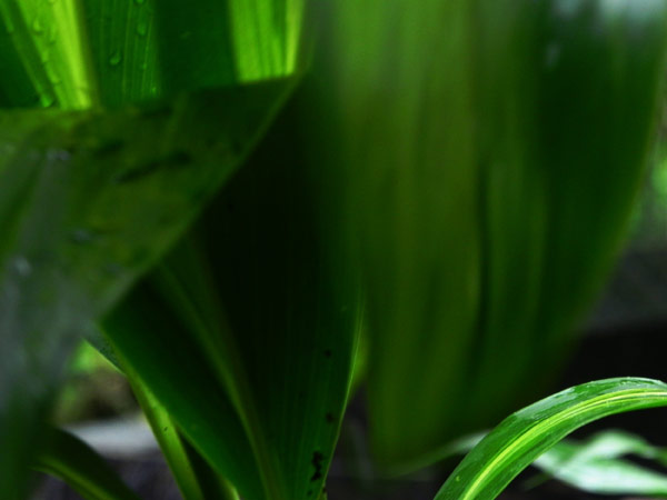 Green leaves texture pack graphicsfuel