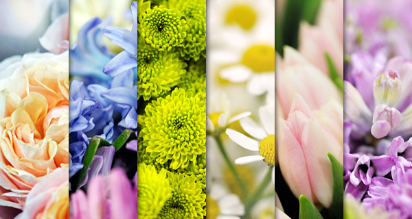Freebie: 6 High Resolution Flower Backgrounds