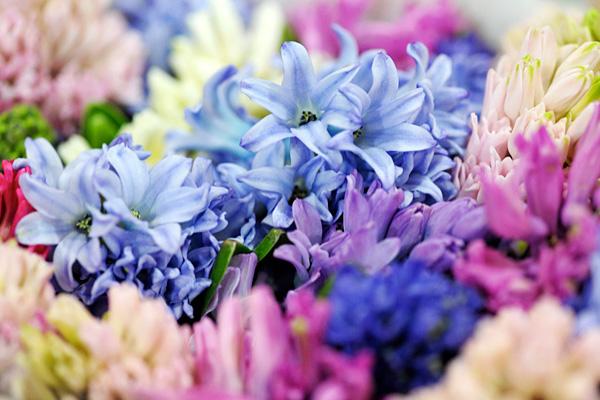 flowers02