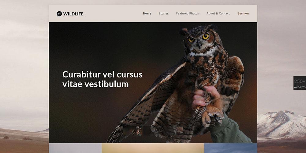 Be Wildlife