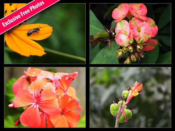 Free flower photos download