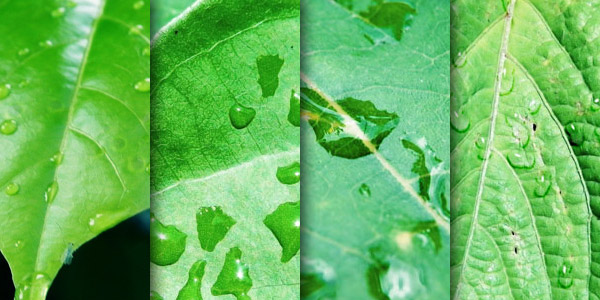 Fresh green leaves with dew drops texture