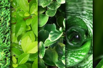 Green leaves texture pack