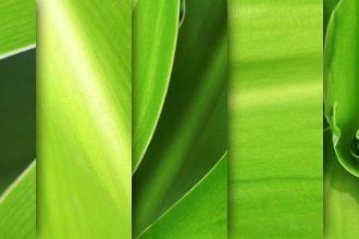 Green leaves macro textures