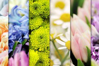 Freebie: 6 High Resolution Flower Backgrounds