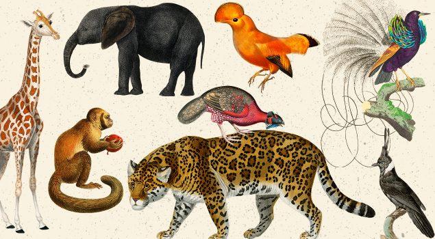 Free Animal And Birds Illustrations