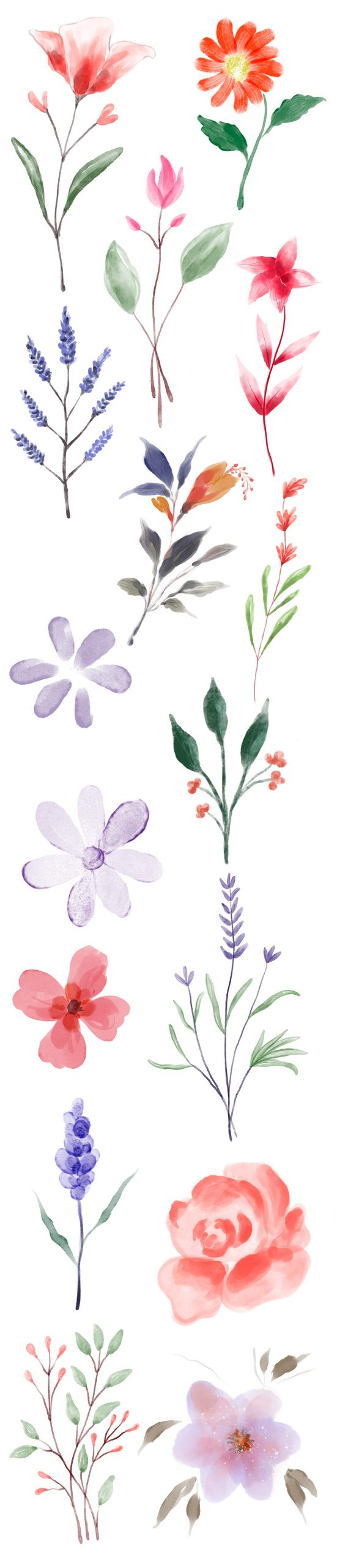 Hand-painted Watercolour Floral Elements