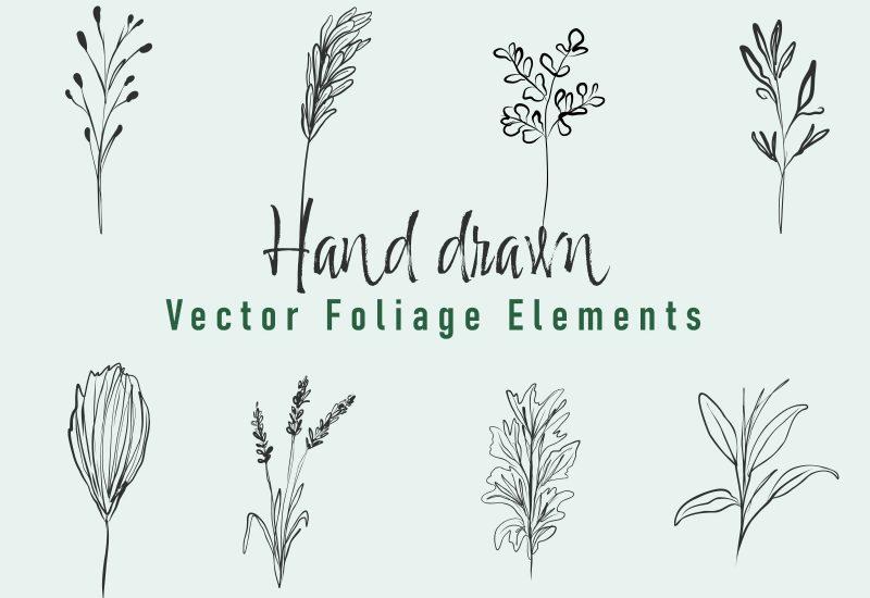Hand Drawn Vector Foliage Elements