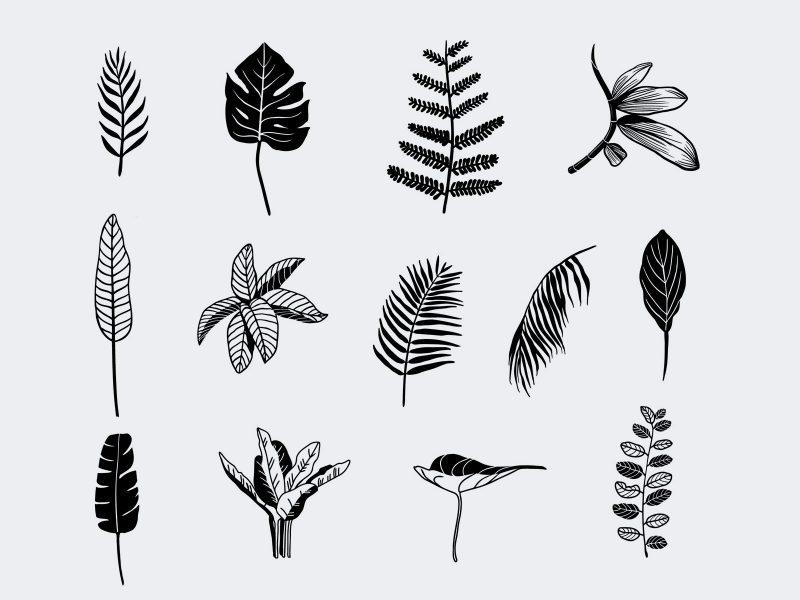 Vector Handrawn Tropical Leaves