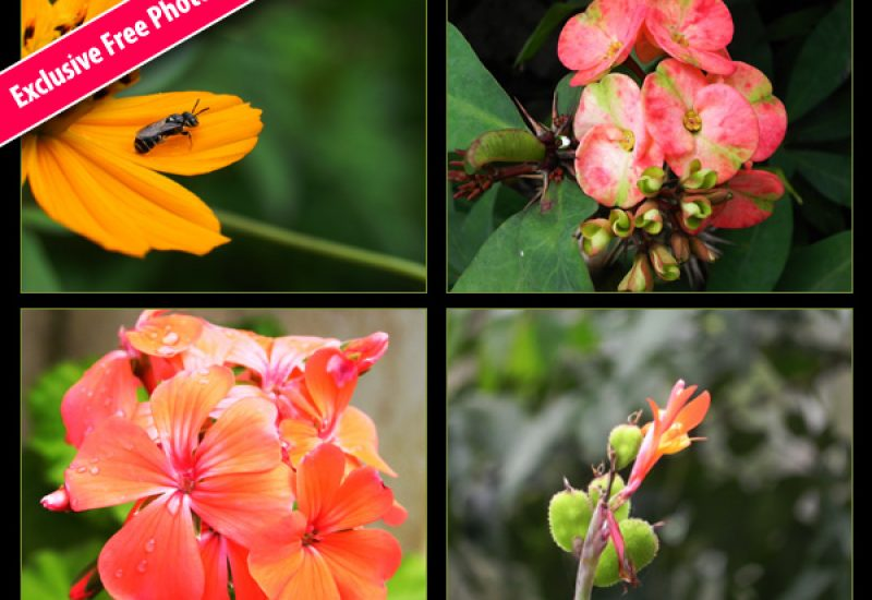 free-flower-photos