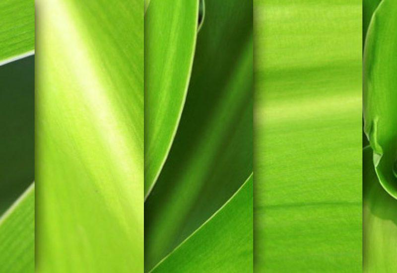 green-leaves-macro-textures