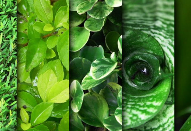 green-leaves-texture