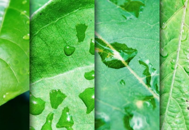 leaf-textures-dew