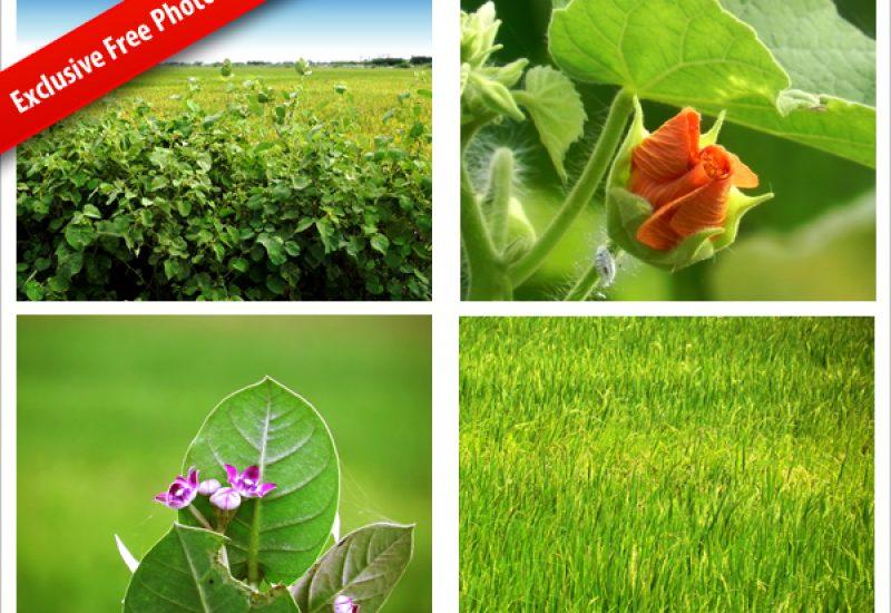 nature-photos
